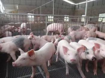 生猪养殖消毒技术规范